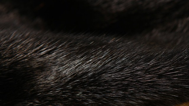 Почему мех норки самый востребованный
