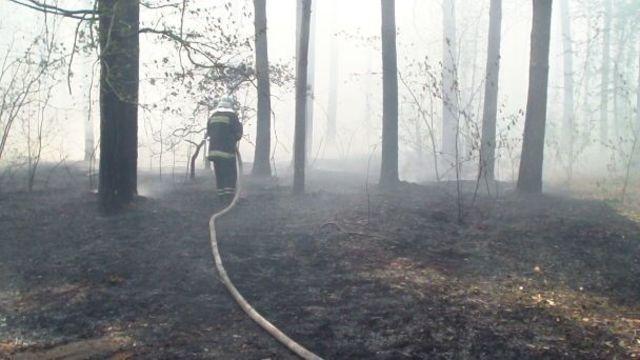 В Костромской области потушили два лесных пожара